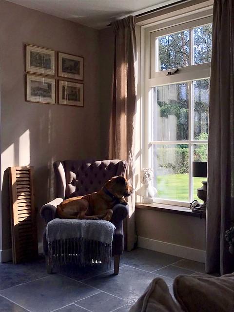 Landelijke fauteuil met bruine hond luik muur