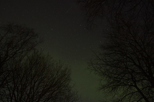 Aurora Borealis in the forest