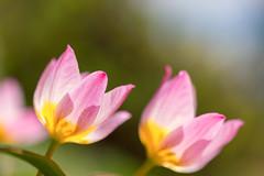 Spring Flowers [Explore]