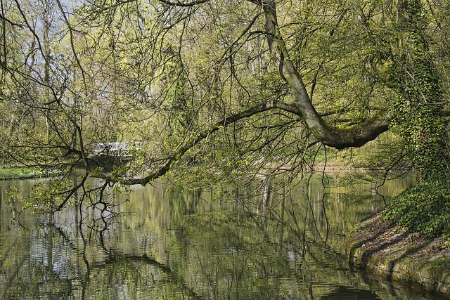 Baum im Schlosspark Herrnsheim