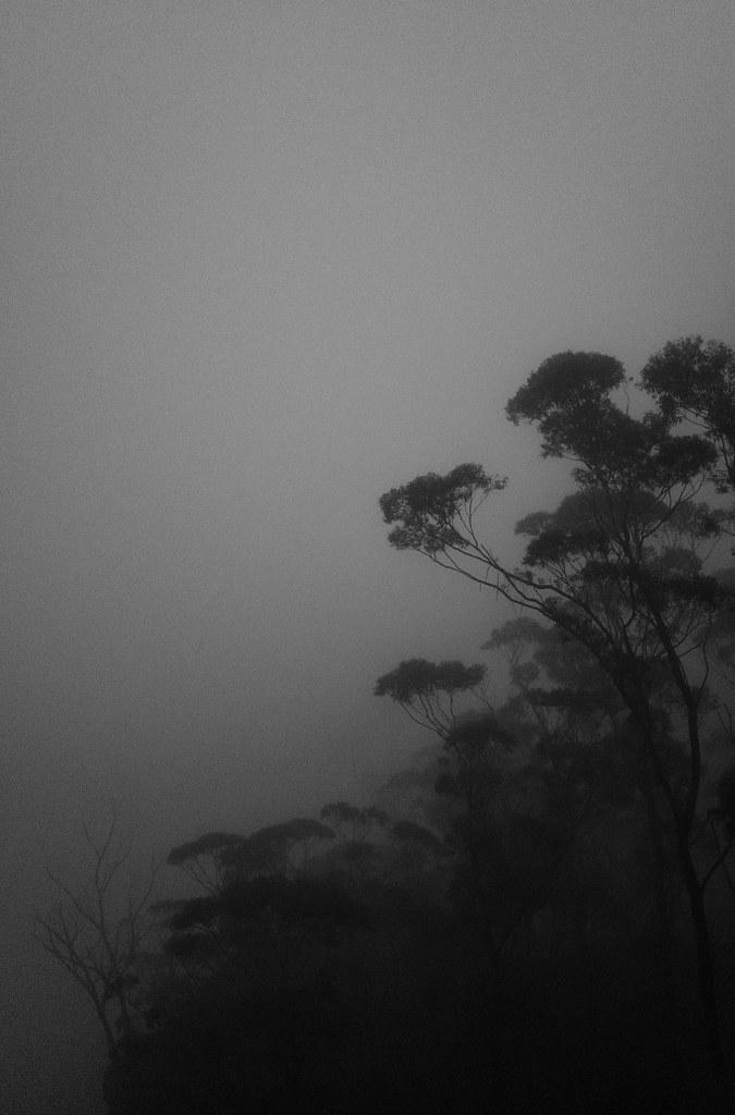 Blue Mountains fog