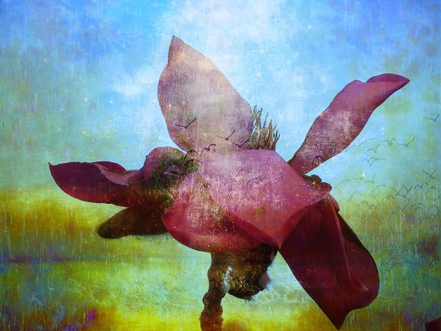 Magnolia sonnet