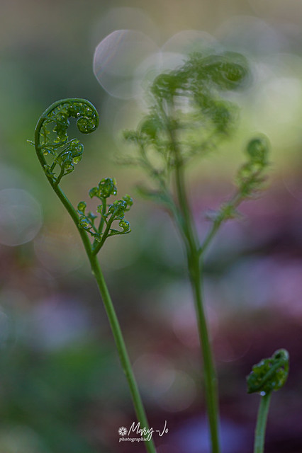 La spirale de la vie ...   The spiral of life ...