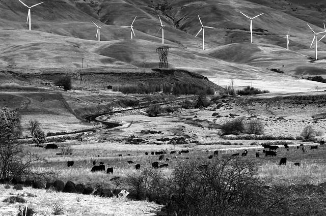 Maryhill Windmills, Margh 2020