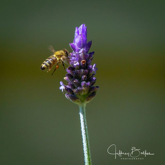 Garden shots-947576