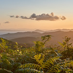 9. September 2019 - 7:10 - We woke up in the middle of the night to try to get to the highest accessible point of the island to see the sun rise. Once there we noticed that it was full of trees and that the plan was a total failure. Luckily, the way back gave us some nice views like this ferns over the Tyrrhenian sea