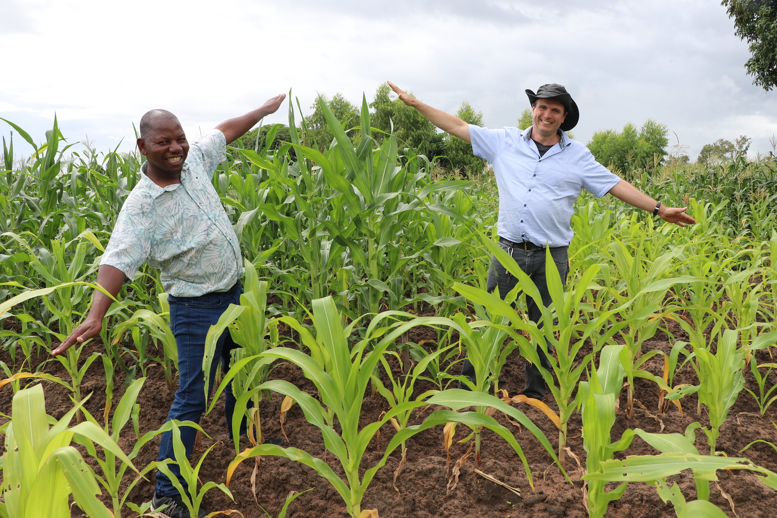 Clear as day and night! Drs Regis Chikowo (Michigan State University) and Christian Thierfelder (CIMMYT) compare maize treatments for maize/legume rotation with reduced fertilizer vs control (no maize/legume rotation, no fertilizer). Photo credit: Eveline