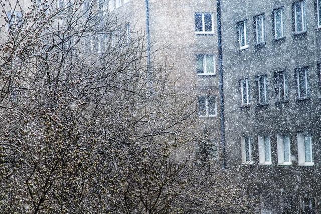 ... spring, snow and quarantine ...