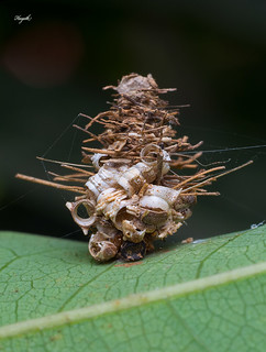 Bagworm moth caterpillar, naturally gifted architect | by walksthewildside