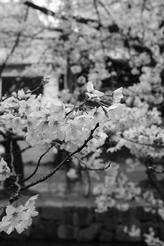 31-03-2020 Kyoto in morning (8)