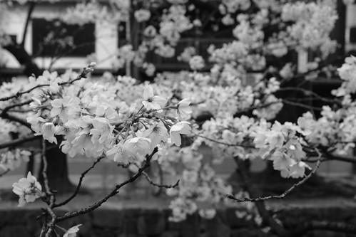 31-03-2020 Kyoto in morning (7)