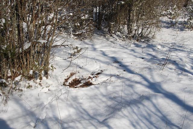 Jäljed lumel / Spring