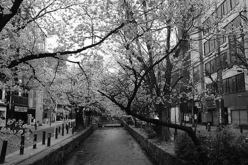 31-03-2020 Kyoto in morning (6)
