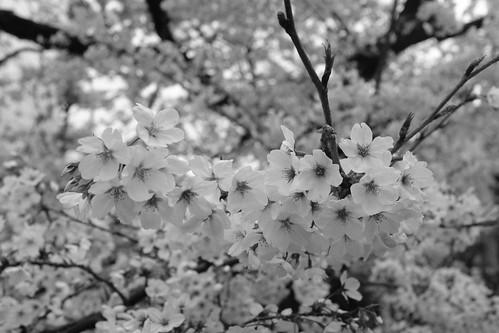 31-03-2020 Kyoto in morning (4)