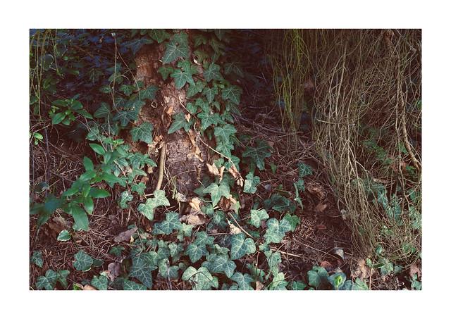 Undergrowth Wonders