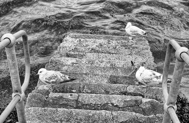 gulls on steps
