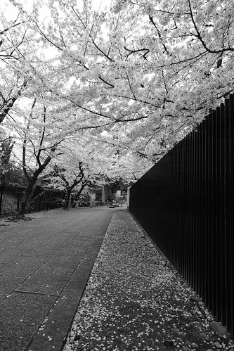 31-03-2020 Kyoto (21)