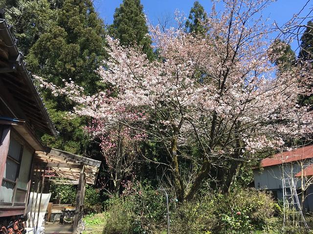 それでも春はやってくる!