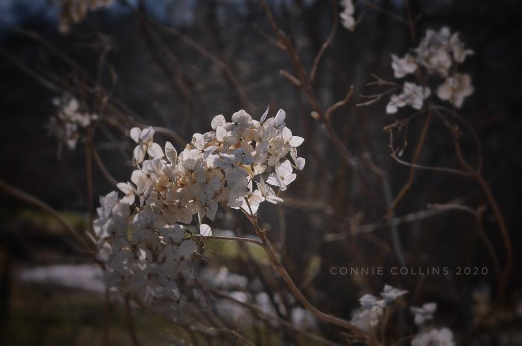 Mar 13 Last season's beauty