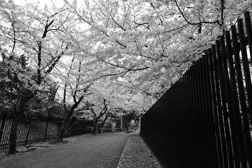 31-03-2020 Kyoto (20)