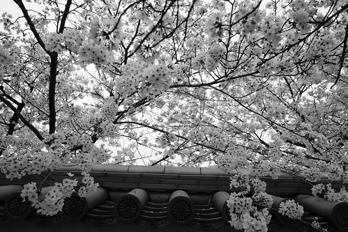 31-03-2020 Kyoto (24)
