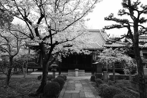 31-03-2020 Kyoto (13)