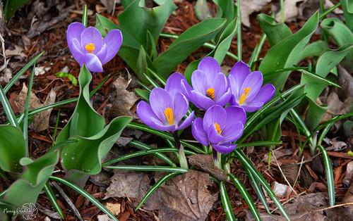pentaxk3ii spring buds huroneast ontario canada