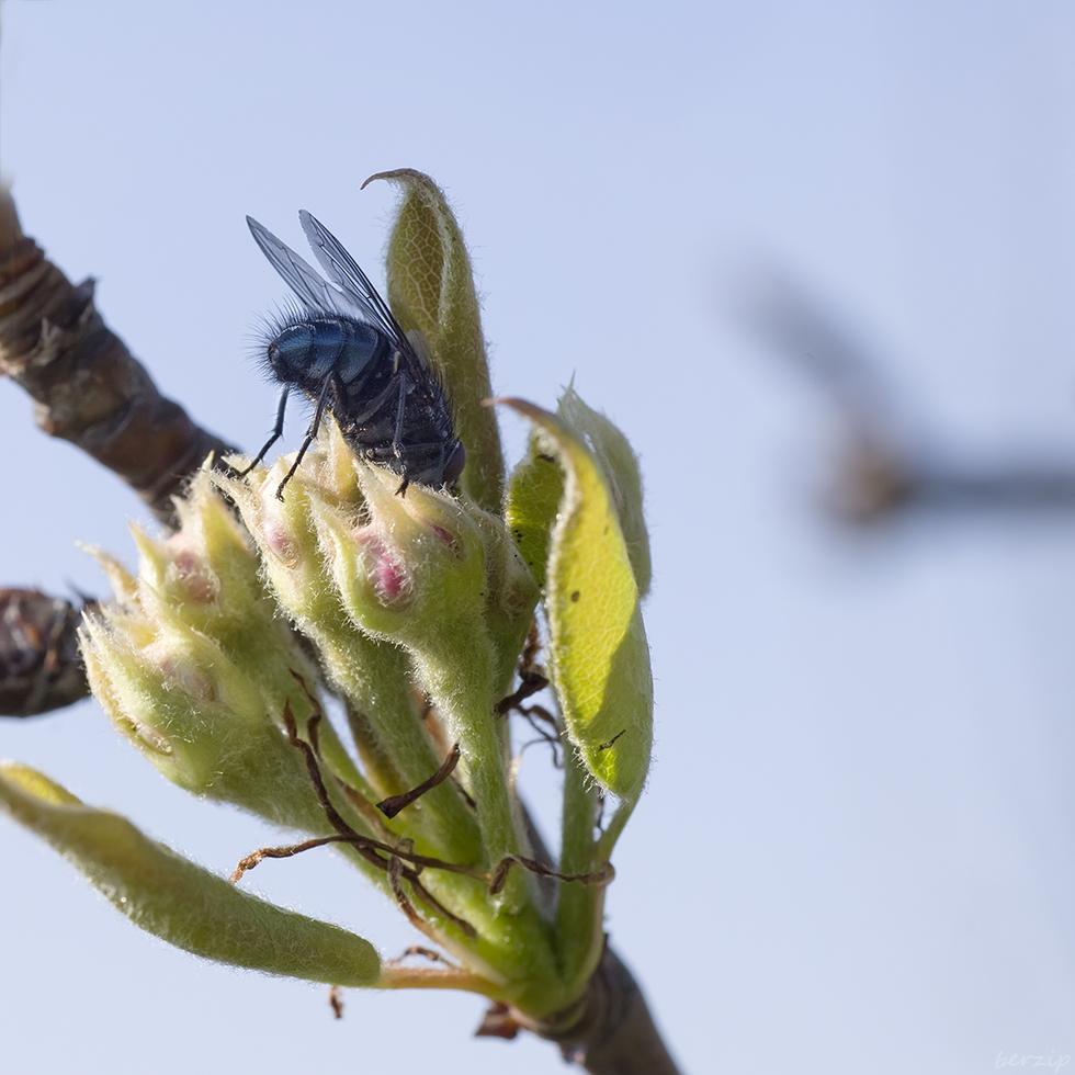 Macros/  proxi/  insectes  - Page 26 49720803566_9f3ebcdb14_o