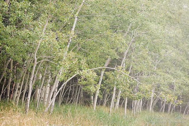 Parc national du Bic, Lisière de forêt dans l'Anse à Damase