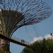 Gardens By The Bay _ Grant Associates & Wilkinson Eyre _ Singapore _ 2012