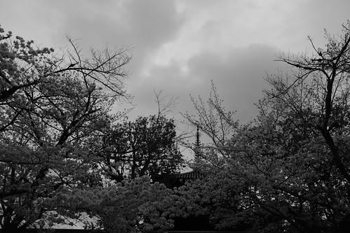 01-04-2020 Nara in morning vol02 (16)