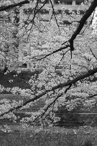01-04-2020 Nara in morning vol02 (6)