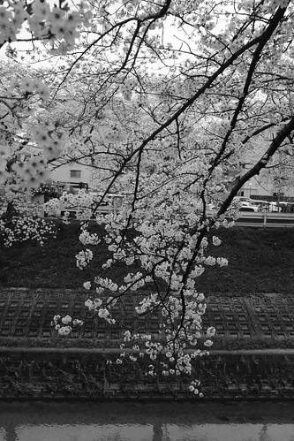 01-04-2020 Nara in morning vol02 (3)
