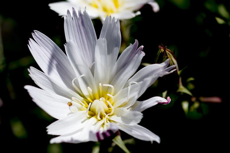 Flower-29-7D1-032720