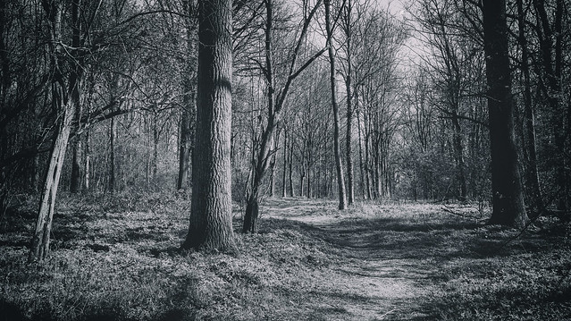 If you go down into the woods today.......