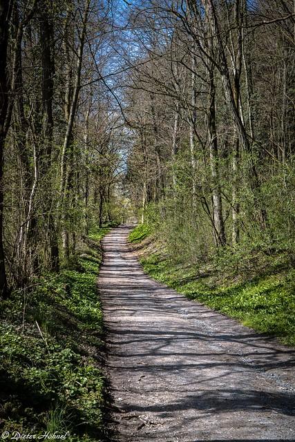 Waldweg am Frühlinganfang