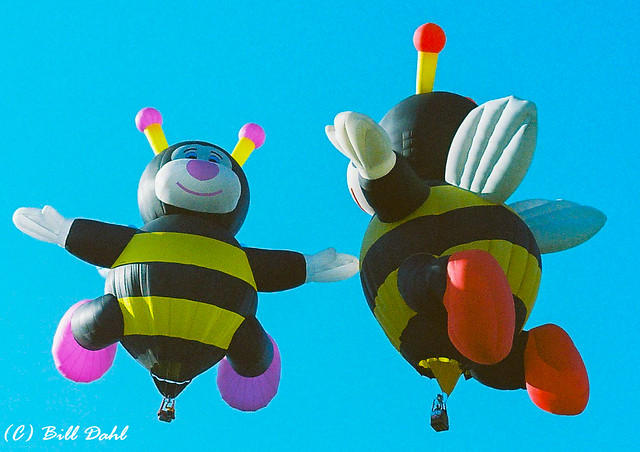 ABQ Balloons - 3
