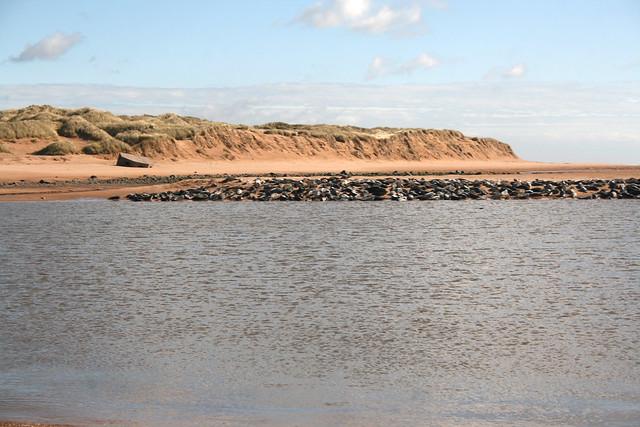 River Ythan and Seals at Newburgh
