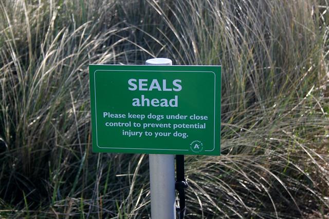 Seals ahead!