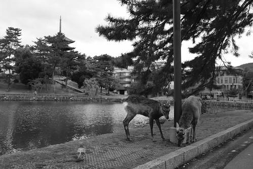 01-04-2020 Nara in morning vol02 (14)