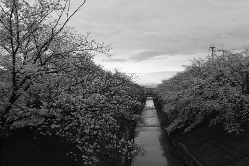 01-04-2020 Nara in morning vol02 (1)