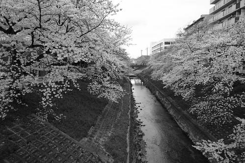 01-04-2020 Nara in morning vol01 (14)