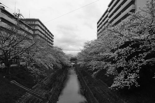 01-04-2020 Nara in morning vol01 (9)