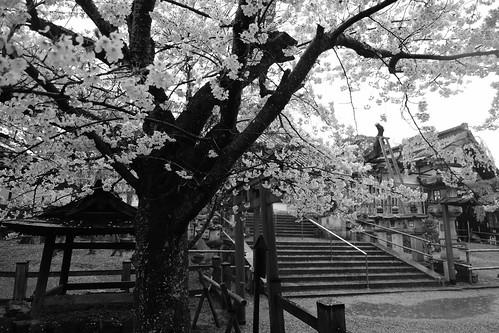 01-04-2020 Nara vol01 (61)