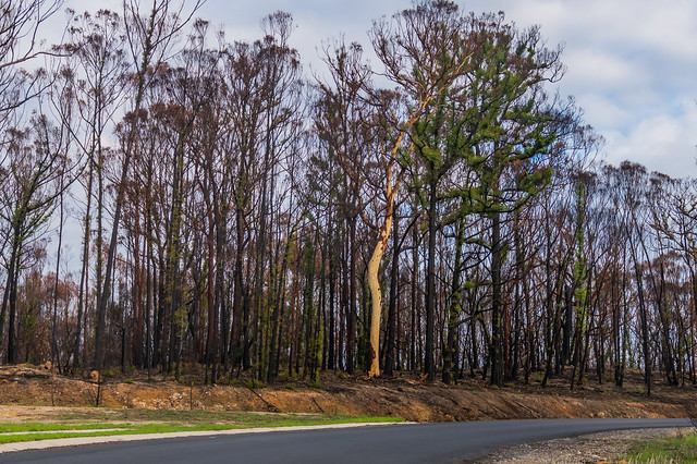 Regeneration - New life in the forest after the fires