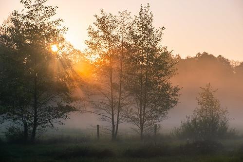 landscape nature mazovia poland trees outdoors morning sunrise dawn fog mist sunlight