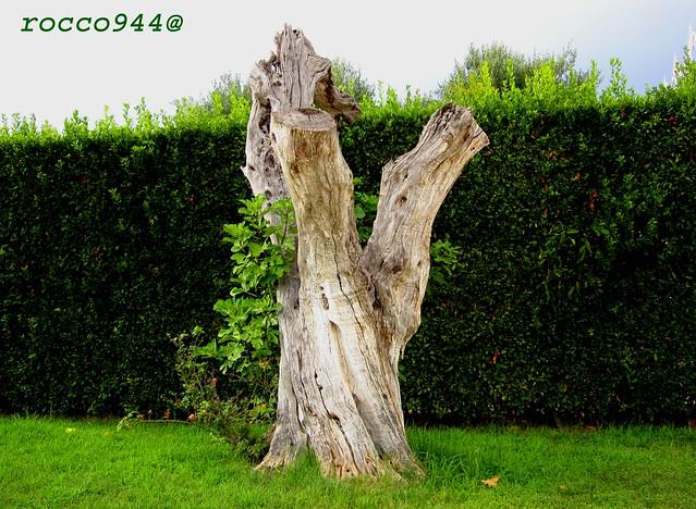 Vecchio tronco - Old trunk