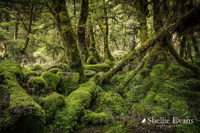 Gunns Bush, Cascade Creek, Fiordland National Park, New Zealand