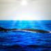 baleine .jpg s.jpg