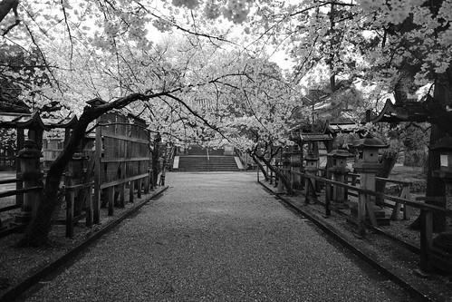 01-04-2020 Nara vol01 (58)